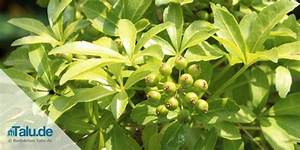 Pflanzen Die Kein Licht Brauchen : pflanzen wenig licht pflanzen schlafzimmer wenig licht ~ Lizthompson.info Haus und Dekorationen