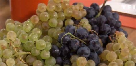 recettes laurent mariotte cuisine tv c 39 est de saison le raisin laurent mariotte