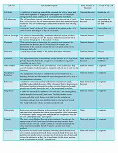 Organelle Chart Key