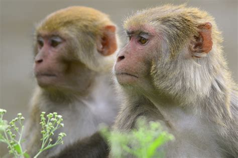 Are monkeys superstitious?