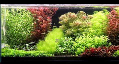 Best Substrate For Aquascaping by Black Aquarium Substrate 1000 Aquarium Ideas