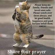 Funny Cat Sayings Quotes
