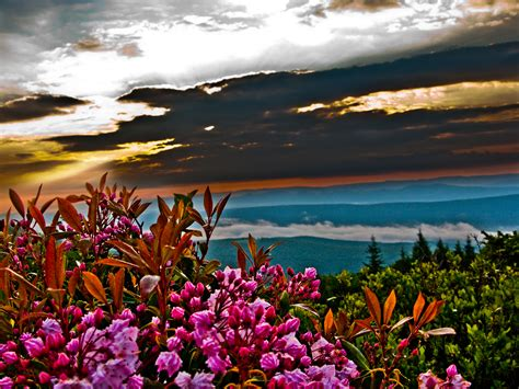 Across The Universe Summer Sunrise Mountain Flowers