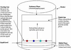 Separation Of Plant Pigments By Paper Chromatography
