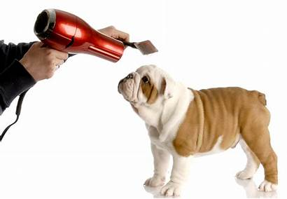 Grooming Dog Bulldog Hond Verzorgen Van Puppy