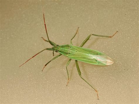 grass bugs pictures grass bugs images reverse search
