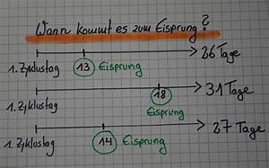 Wie Eisprung Berechnen : die besten 25 fruchtbare tage ideen auf pinterest eisprung zyklus eisprung und eisprung ~ Themetempest.com Abrechnung