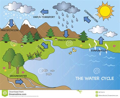 Water Cycle Stock Illustration. Illustration Of Plant