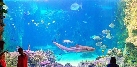 sydney aquarium combo passes experience oz