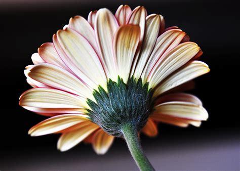 photograph flowers