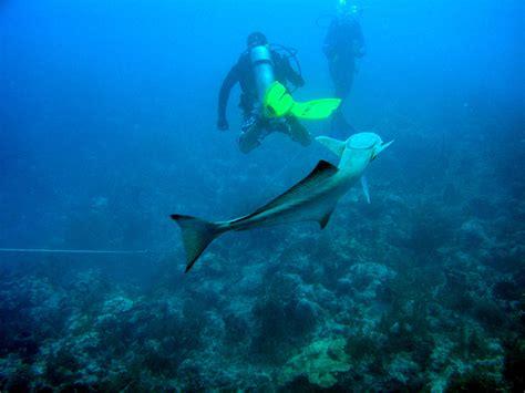 diving bimini