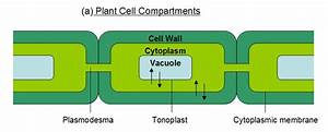 Structure Diagram Of Cell