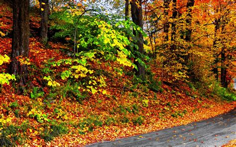 why do trees change color why do tree leaves change color each fall orchard park
