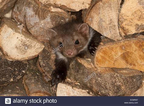 mäuse im haus vertreiben m 228 use dachboden vertreiben m use auf dem dachboden so vertreiben sie sie schonend m use
