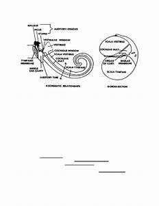 Figure 1-7  Diagram Of The Scalae
