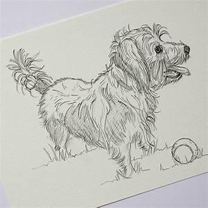Personalised Pet Portrait Line Drawings By Adam Regester
