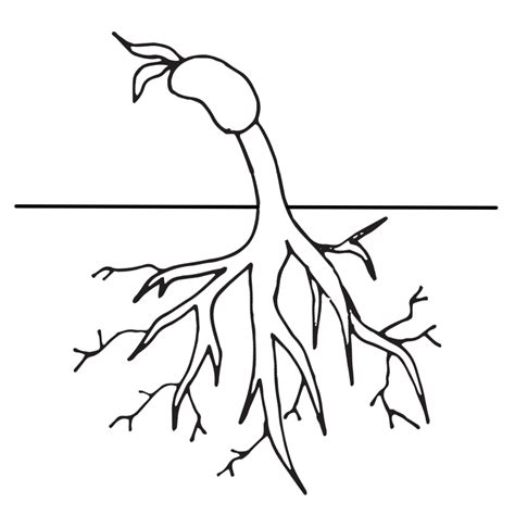 Coloring Roots At Home by Beautiful Tree Coloring Pages With Roots Top Free