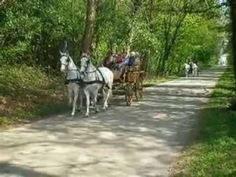 carrozze con cavalli gita nel bosco con carrozze a cavalli www realfriuli it