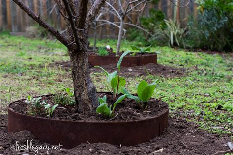 promote  growth  healthy fruit trees