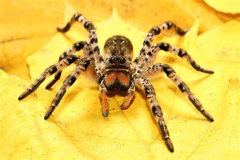 feuchten rasen mähen heimische spinnen 8 beine 8 augen 8 arten bl 252 hendes 214 sterreich