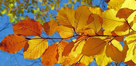 why do leaves change color in fall why do leaves change color in the fall rightplantz