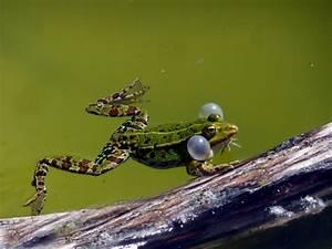 Grünes Wasser Im Gartenteich Hausmittel : schnelle hilfe was tun wenn das teichwasser tr b ist die tipps helfen ~ Watch28wear.com Haus und Dekorationen