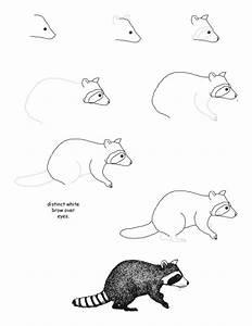 How to draw a raccoon step-by-step (kids, art) | ציורים של ...