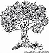 Coloring Tree Adult Template Printablecolouringpages Larger Credit sketch template