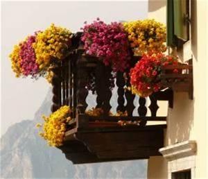 zwiebelblumen kaufen und richtig pflanzen With französischer balkon mit garten magazin
