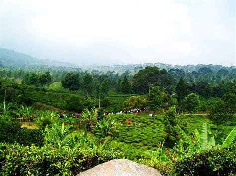 Filepuncak  Bogor  West Javajpg  Wikimedia Commons