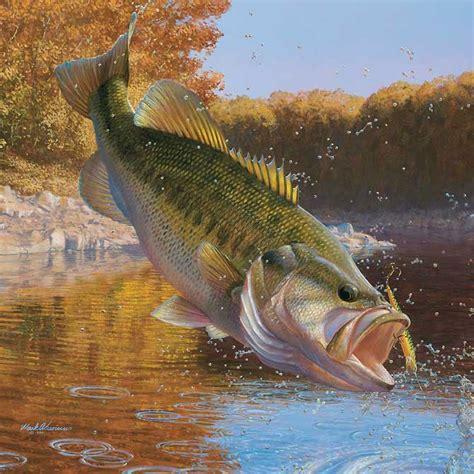 fish fishing wallpaper  wallpoper