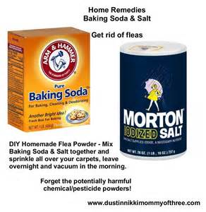 diy flea powder for your home get rid of fleas w o using chemicals pesticides baking soda