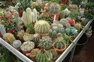 Entretien Plantes Grasses : plante grasse cactus pivoine etc ~ Melissatoandfro.com Idées de Décoration