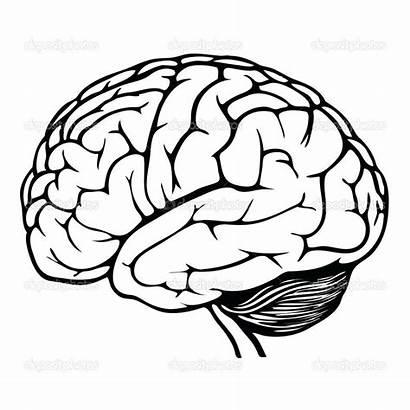 Brain Drawing Anatomy Coloring Pdf Getdrawings