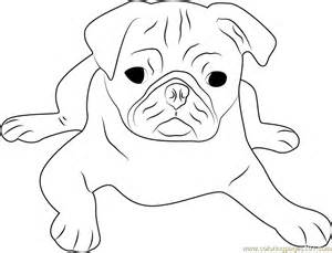 HD wallpapers coloring pages of pugs dogs