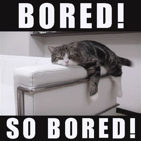 Bored Memes Bored Cat Meme Www Pixshark Images Galleries With