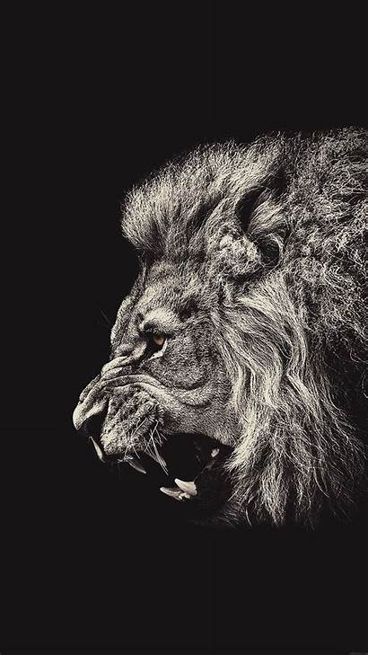 Lion Iphone Wallpapers Male Portrait Plus Wallpaperplay