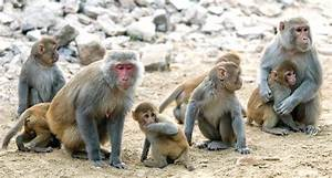 Anxiety In Monkeys Is Linked To Hereditary Brain Traits