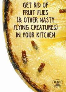 where do fruit flies come from in the bathroom fruit fly With where do gnats come from in the bathroom