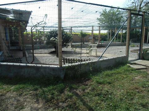 construire un enclos exterieur pour chat vive le chat association chatterie pour donner aux chats la chance de vivre heureux