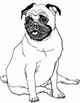 Pug Coloring Pages sketch template