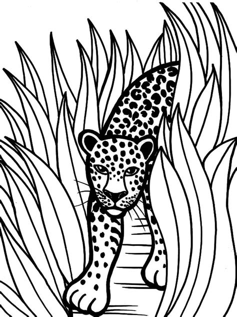 rainforest animal drawing  getdrawingscom
