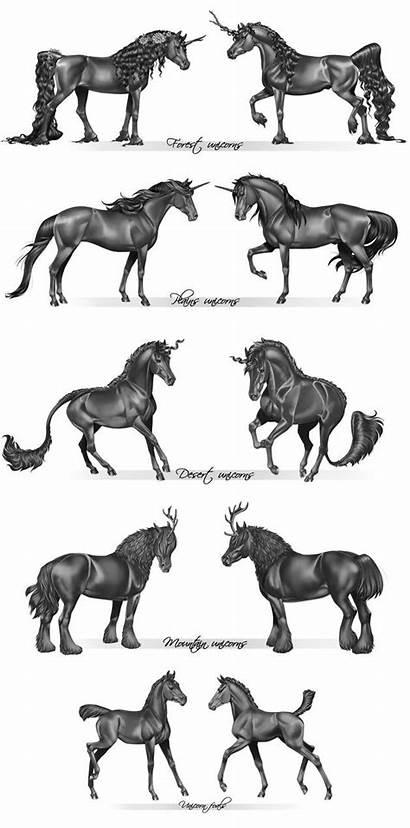 Unicorn Species Unicorns Horse Drawings Draw Creatures