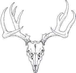 Stag Skull Outline Tattoos Pinterest