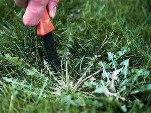 How To Kill Weeds