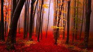 Waterfall: Falls Color Forest Forests 3d Waterfall Desktop ...