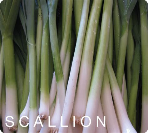 what is a scallion scallion hydro veggies