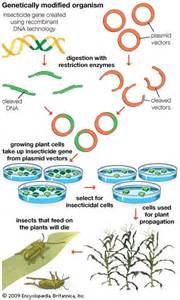 Genetically Modified Organisms DNA