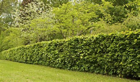 Quels arbres planter pour avoir une belle clu00f4ture ? - Choix des arbres du0026#39;une haie - 18h39.fr