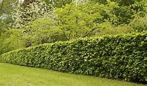 Quels Arbustes Pour Une Haie : quels arbres planter pour avoir une belle cl ture ~ Premium-room.com Idées de Décoration